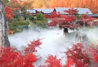 茶室(香流亭)・日本庭園・林床花園