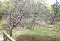 水生園・野鳥観察の森(中央園)