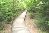 木の道(本園)