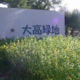 odaka_himawari