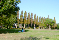 芝生広場(東園)