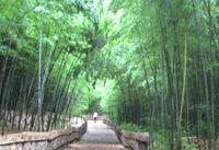 竹林散策路