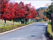shinshiro-enro01