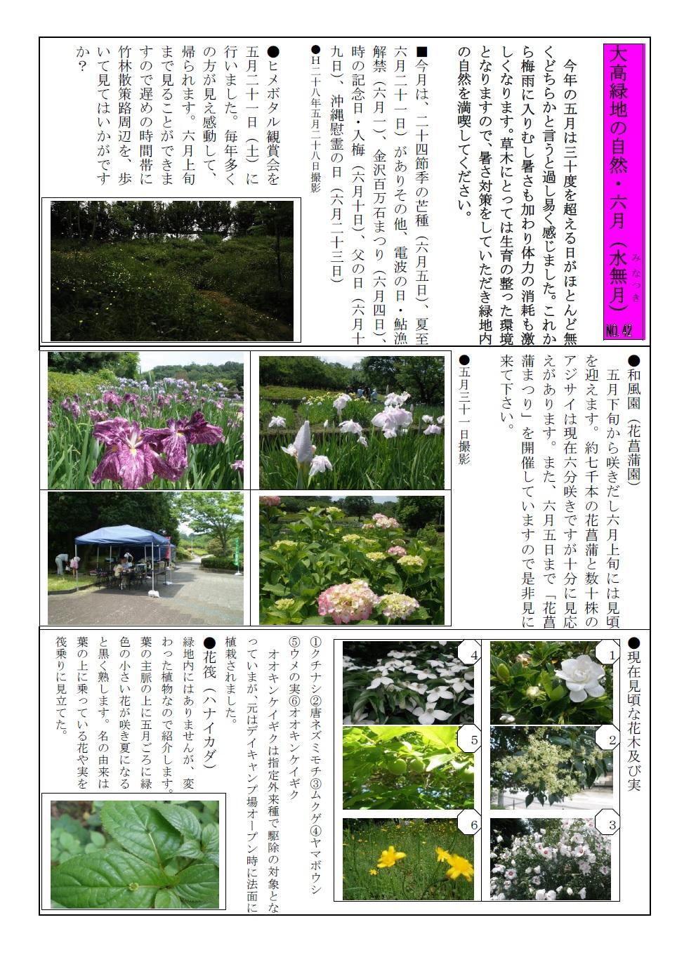 大高緑地の自然・28年6月jpeg