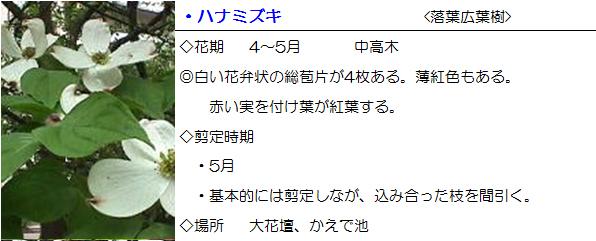 daikadan-hanamizuki