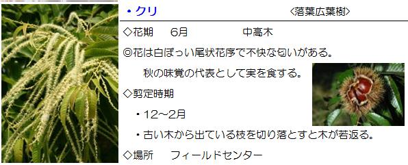 field-kuri