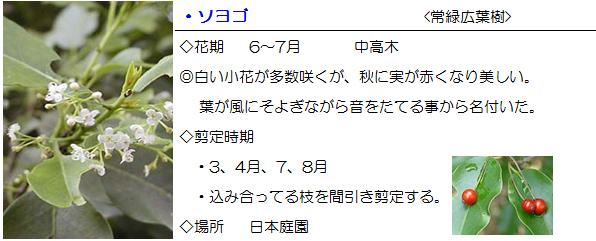 nihonteien-soyogo