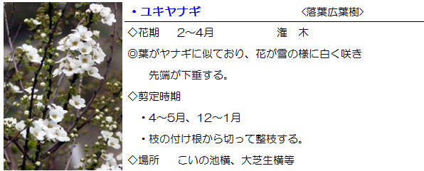 oosiba-yukiyanagi