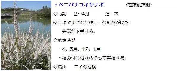 sonohoka-benibanayukiyanagi