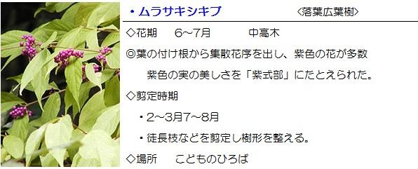 sonohoka-murasakisikibu