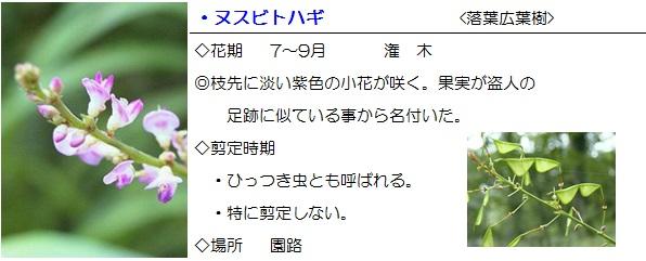 sonohoka-nusubitohagi