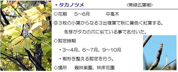 sonohoka-takanotume