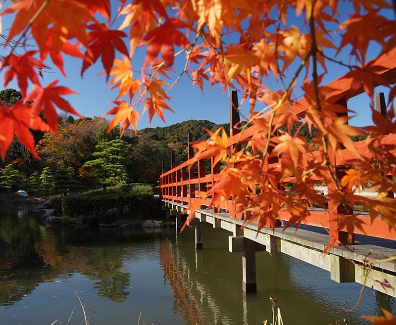 第11回 ふれあい百景フォトコンテスト東三河ふるさと公園 優秀賞『紅葉に染まるふるさと公園』