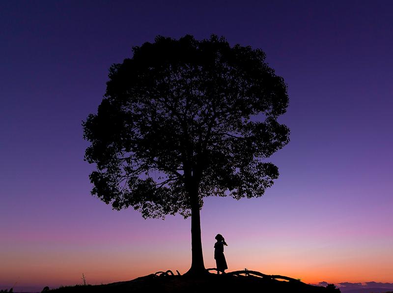 第11回 ふれあい百景フォトコンテスト大高緑地 スマホ部門入選『木と私』