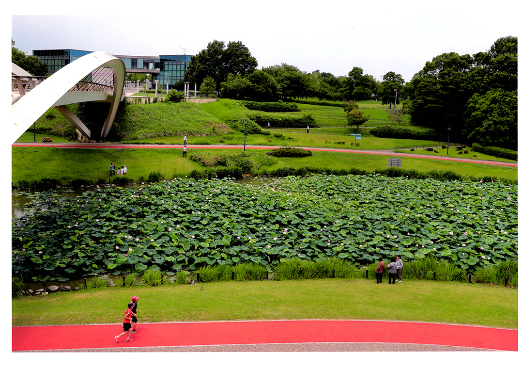 中日写真協会賞 初夏それぞれの朝 あいち健康の森公園