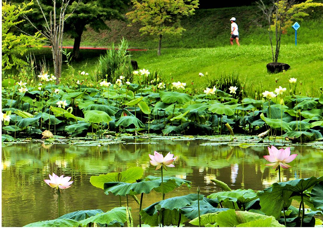 入選 蓮の花園 あいち健康の森公園