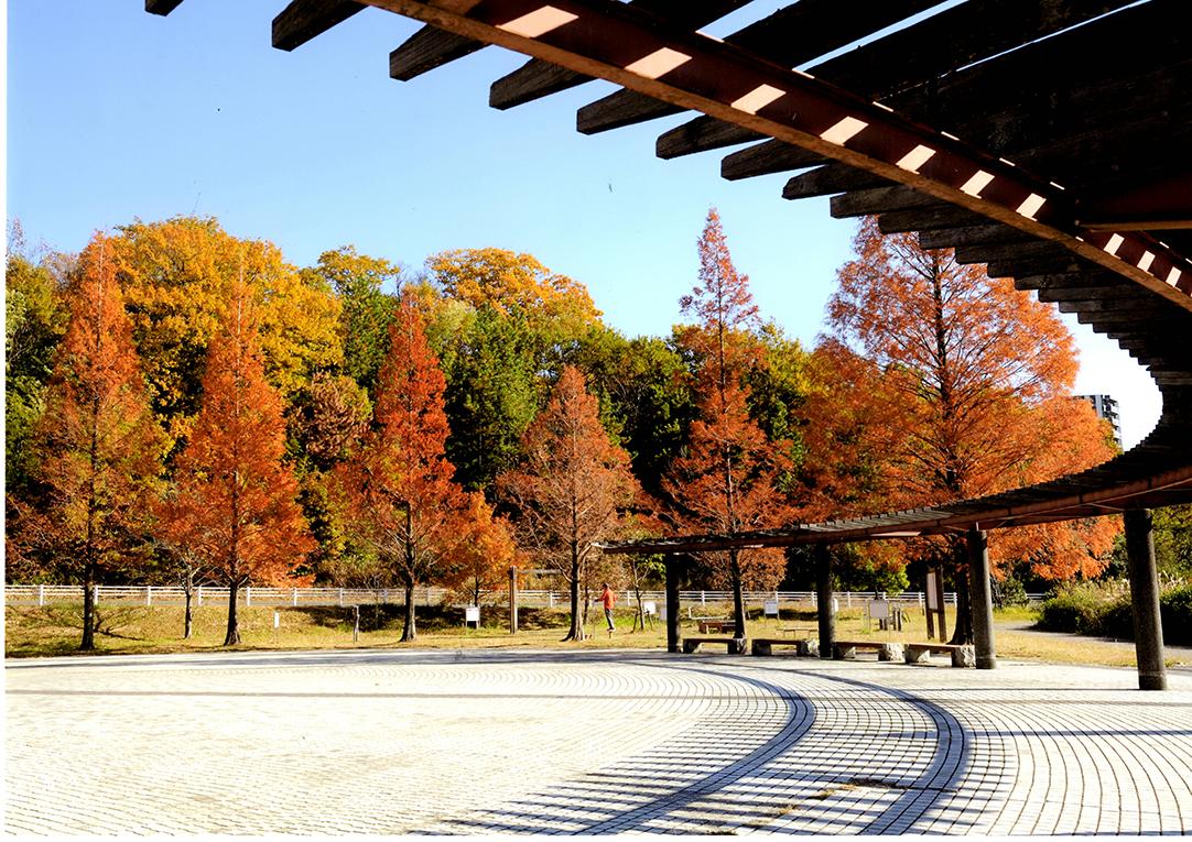 入選 初冬の公園 大高緑地