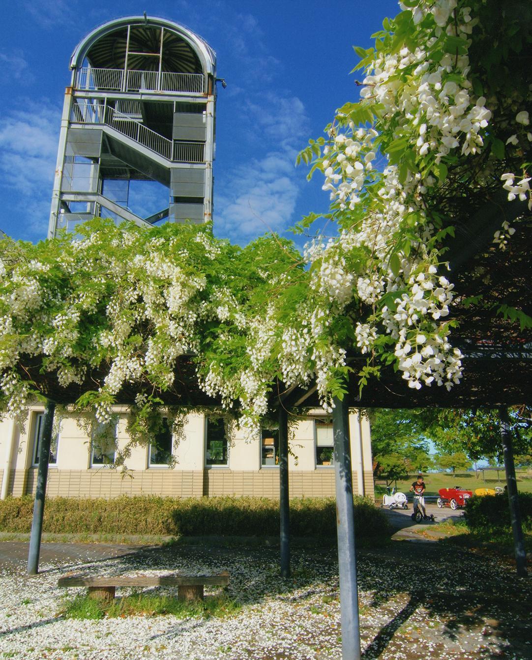 優秀賞 春のフレッシュパーク 尾張広域緑道